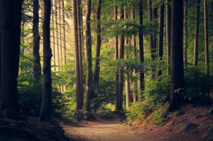 Photo: Forest scene