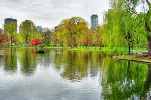 Photo: Boston Public Garden